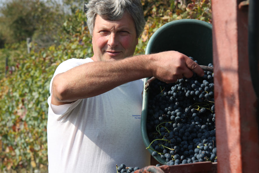 Stefano Rossotto in vendemmia